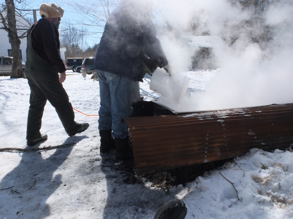 Maple sugaring time - harvested sap being poured into the evaporator